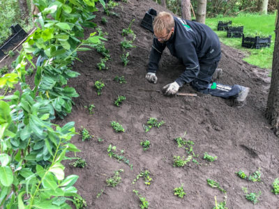 Anlægsgartner Holbæk, Odsherred, plantning af planter
