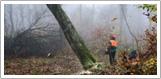 Træfældning Holbæk, Odsherred, fældning af træ