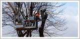 Træfældning Holbæk, Odsherred, nedskæring af træ fra lift