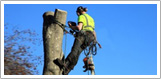 Træfældning Holbæk, Odsherred, topkapning af træ