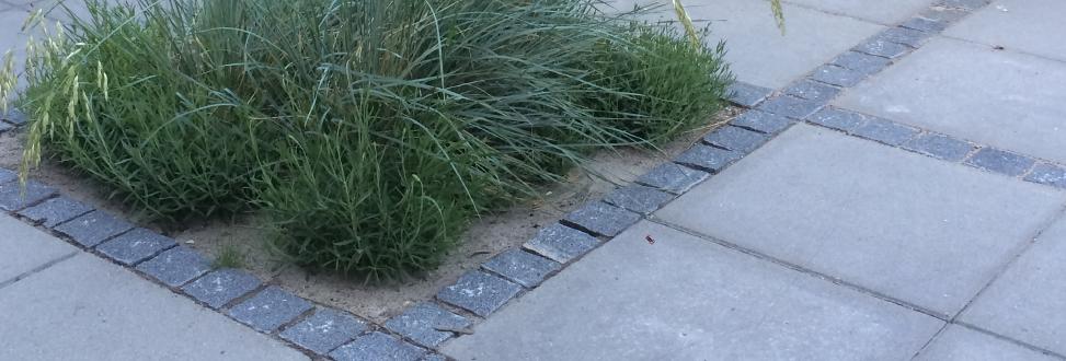 Belægning Holbæk, Odsherred, fliser adskiller sti og græs
