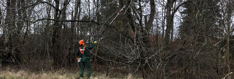 Beskæring af buske Holbæk, Odsherred, medarbejder skære grene af med lang pind