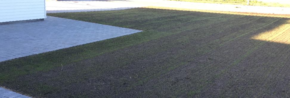 Anlæg af græsplæne Holbæk, Odsherred, græs der gror