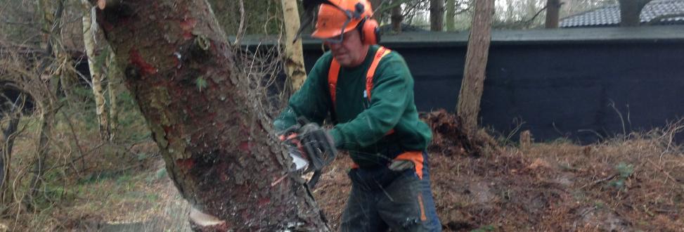 Træfældning Holbæk, Odsherred, medarbejder fælder træ