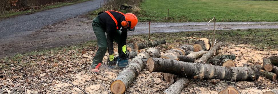 Træfældning Holbæk, Odsherred, træer skæres op til mindre dele